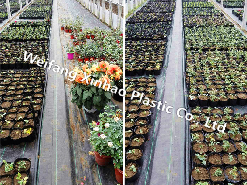 Landscape Fabric for greenhouse ground